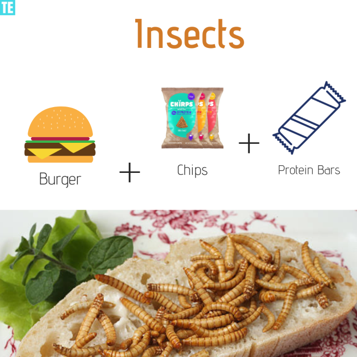 Insects Future Food