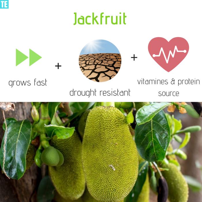Jackfruit meat alternative